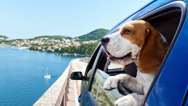 tips for vacationing with your dog