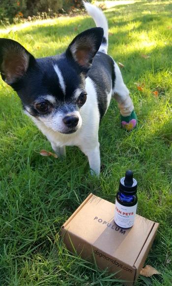 Zen Pets hemp oil