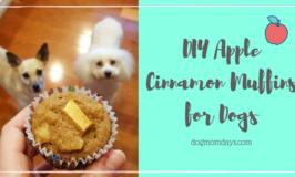 DIY Apple Cinnamon Muffins for Dogs