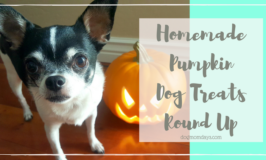 Homemade Pumpkin Dog Treats Round Up