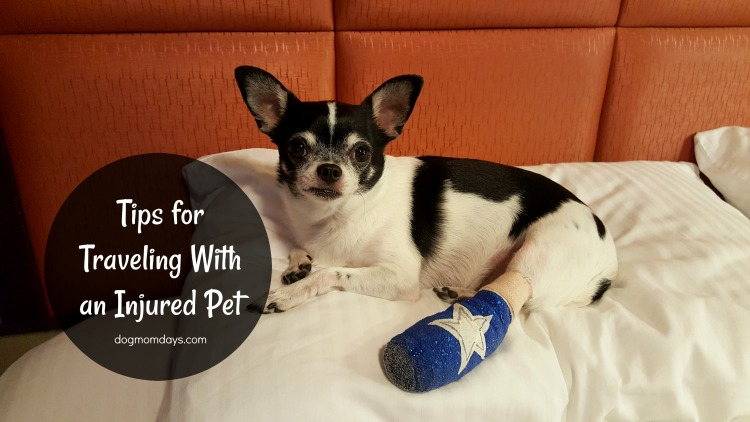 Tips for Traveling With an Injured Dog