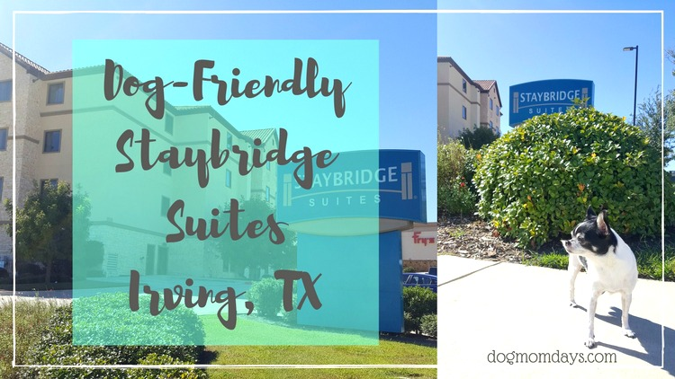 The Dog-Friendly Staybridge Suites in Irving, TX!