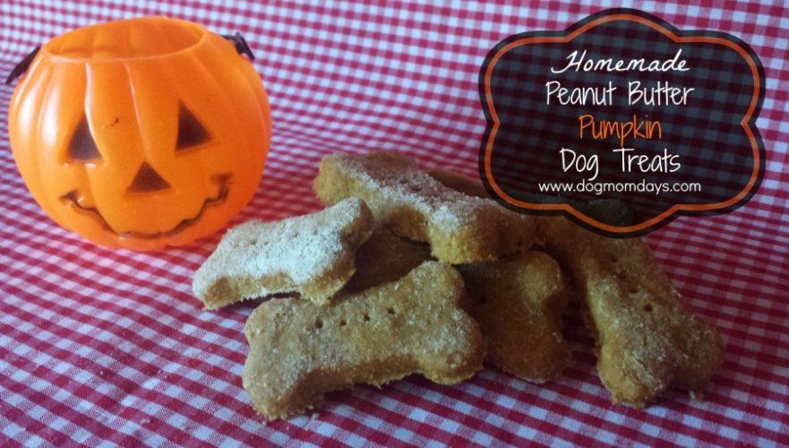 pumpkin dog treats