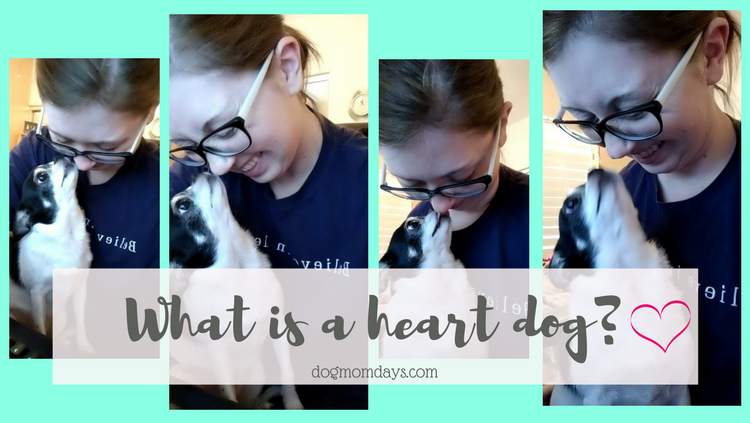 what is a heart dog