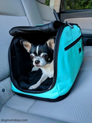 tips for traveling on an airplane with a dog
