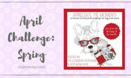 Appreciate the Moments: April Photo Challenge