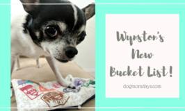 Wynston's New Bucket List