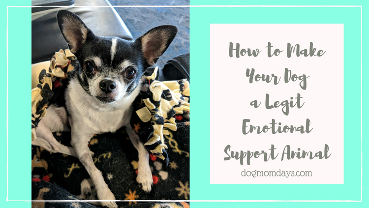 make your dog an emotional support animal