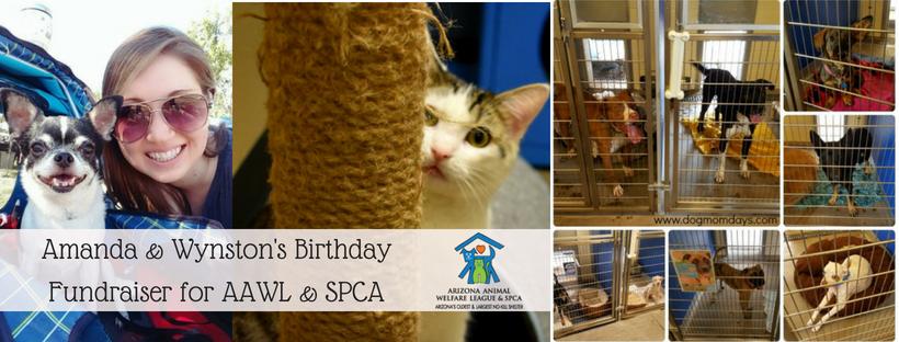 AAWL & SPCA Fundraiser