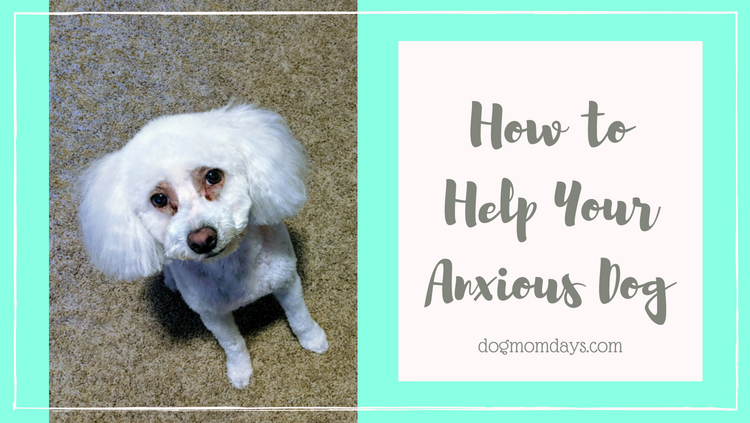 My Dog Has Anxiety: What Can I Do?
