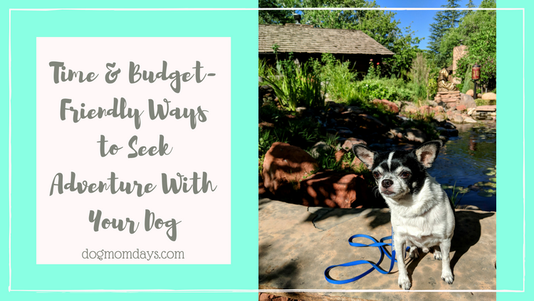 seek adventure with your dog