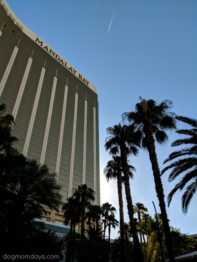 dog-friendly Mandalay Bay