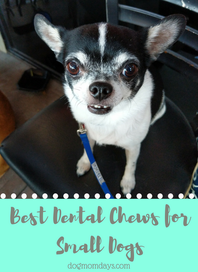 best dental chews for small dogs