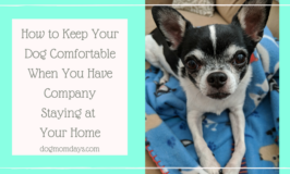 keep your dog comfortable when you have company staying at your home