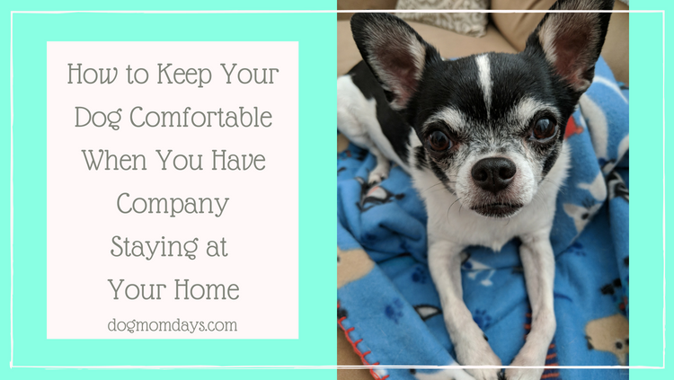 How to Keep Your Dog Comfortable When You Have Company Staying at Your Home