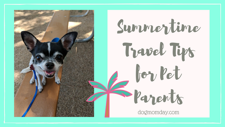 Summertime Travel Tips for Pet Parents