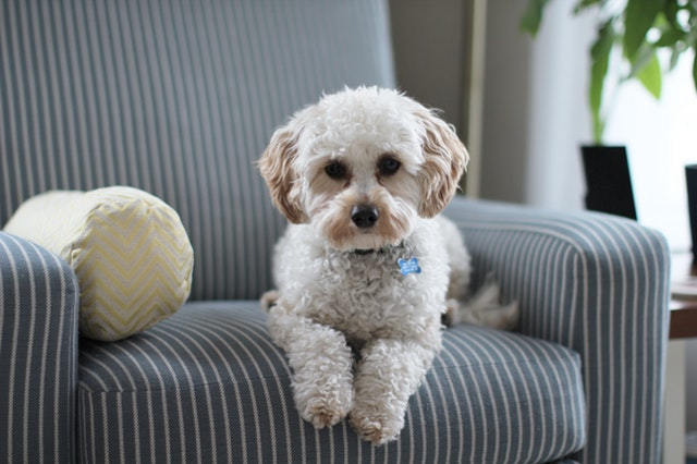 keep your dog comfortable when you have company staying in your home