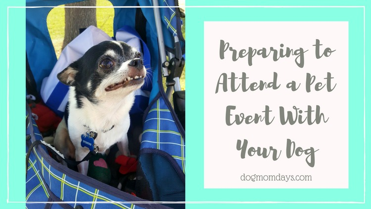 tips for preparing to attend a pet event with your dog