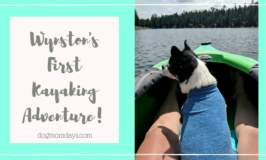 Wynston's first kayaking adventure