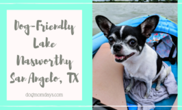 dog-friendly Lake Nasworthy
