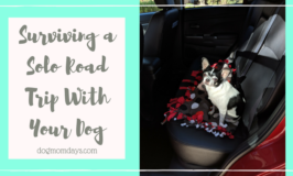 surviving a solo road trip with your dog
