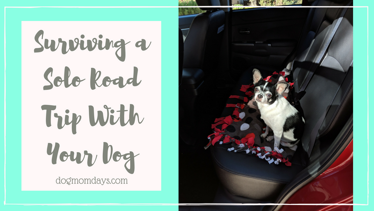 Tips for Surviving a Solo Road Trip With Your Dog