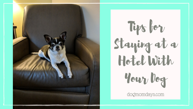 tips for staying at a hotel with your dog