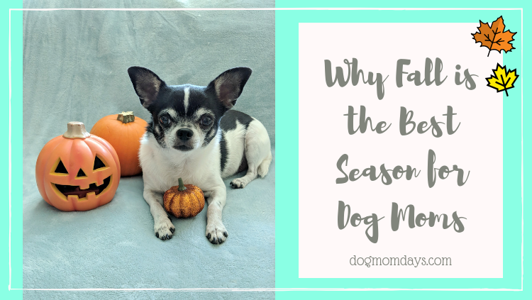 Why fall is the best season for dog moms