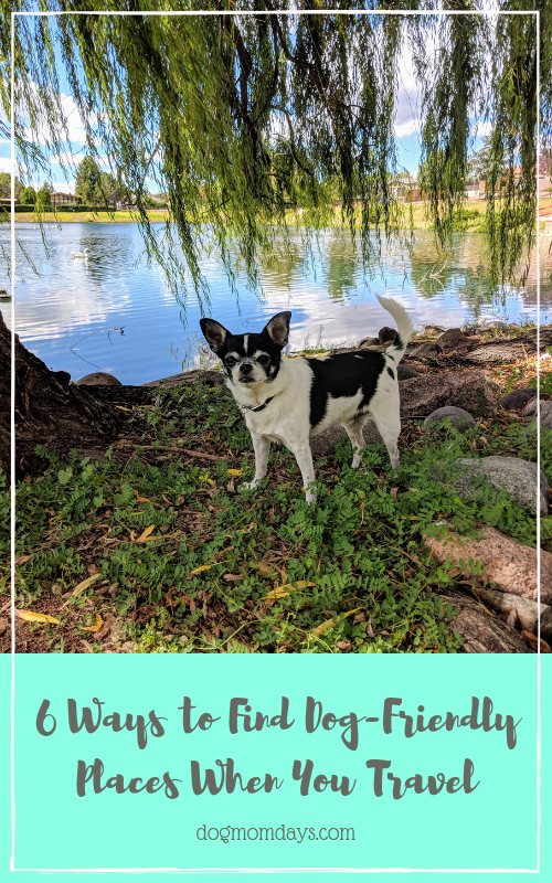 Dog Friendly Days Out Near Me