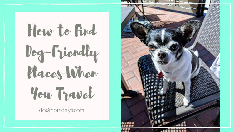 ways to find dog-friendly places when you travel