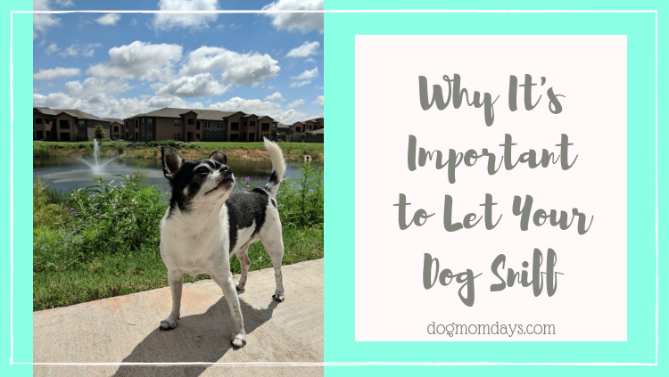 why it's important to let your dog sniff