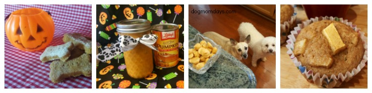 DIY fall dog treat recipes