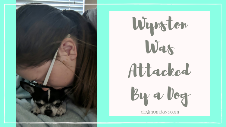 Wynston was attacked by a dog