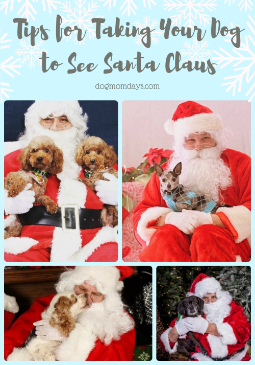 tips for taking your dog to see santa claus