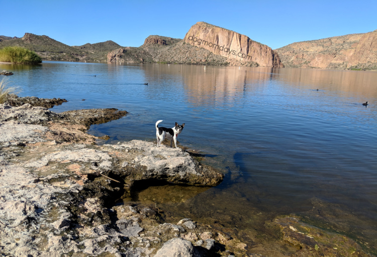 dog-friendly Canyon Lake, AZ
