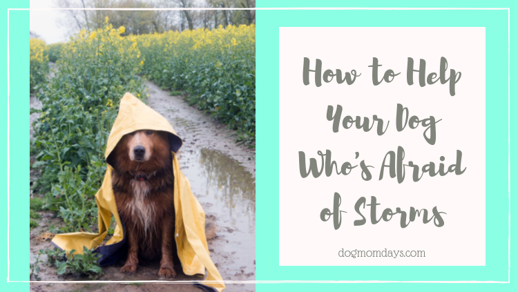 how to help your dog who's afraid of storms
