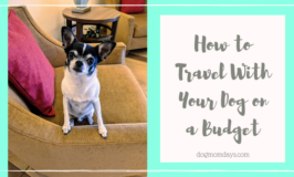 how to travel with your dog on a budget
