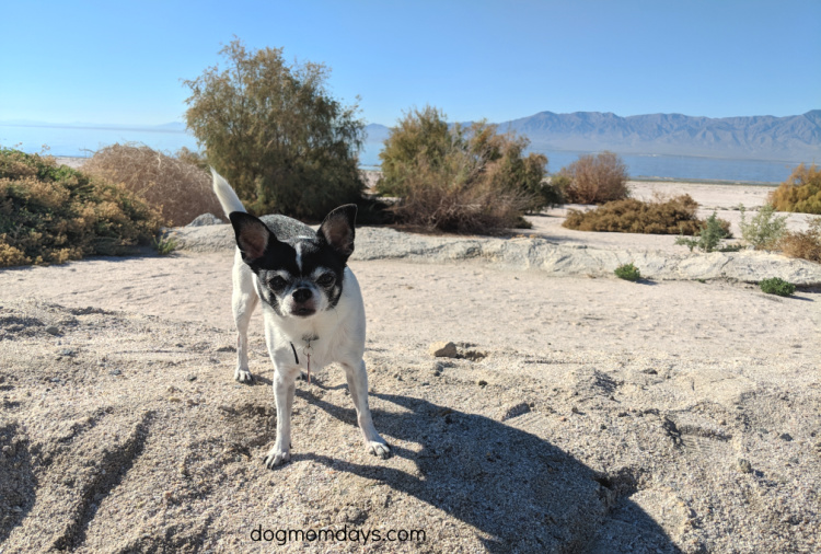 trip to Indio, CA