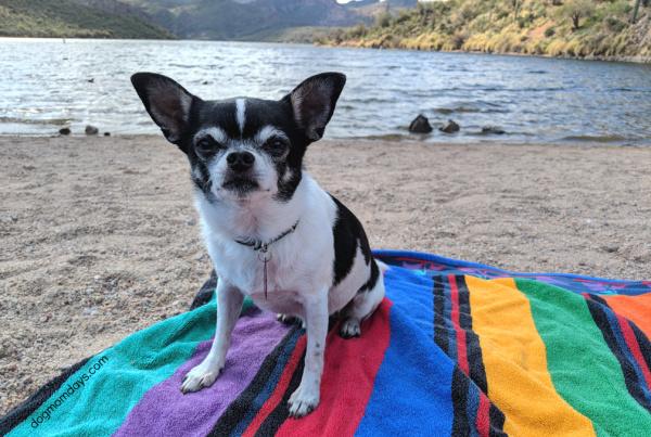 Saguaro Lake and Butcher Jones