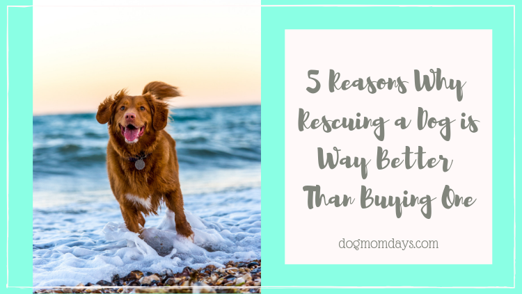 5 reasons why rescuing a dog is way better than buying one