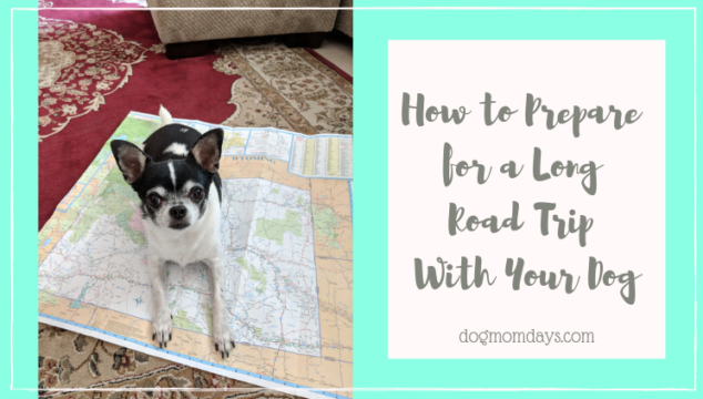 how to prepare for a long road trip with your dog