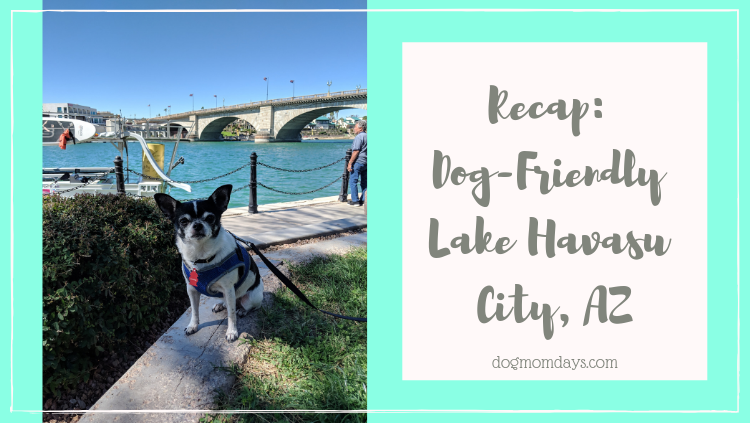 Lake Havasu City, AZ: Home to Dog-Friendly Bars, Boats & Beaches