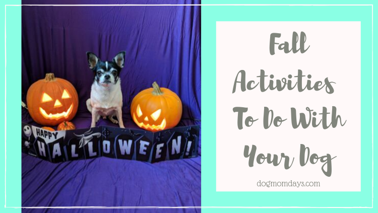 9 Fall Activities To Do With Your Dog