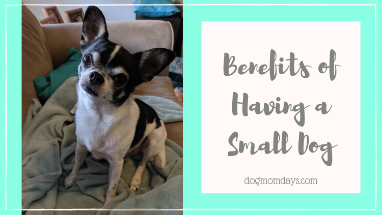 7 Benefits of Having a Small Dog
