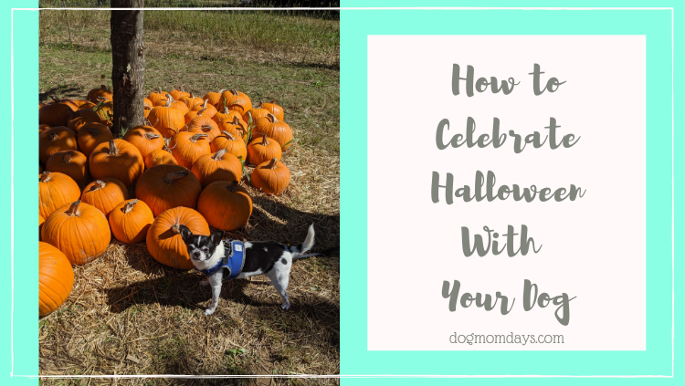 How to Celebrate Halloween With Your Dog