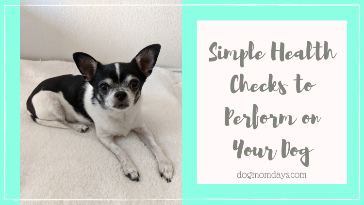 simple health checks you can perform on your dog