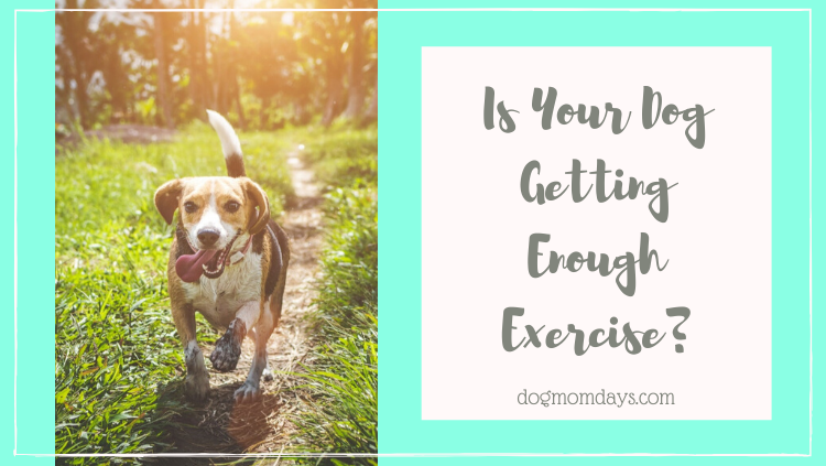 is your dog getting enough exercise
