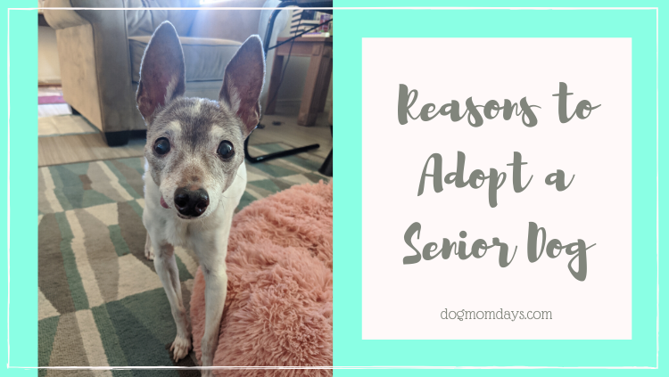 reasons to adopt a senior dog