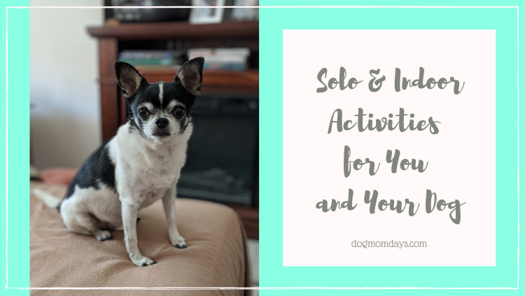 Solo and Indoor Activities for You and Your Dog
