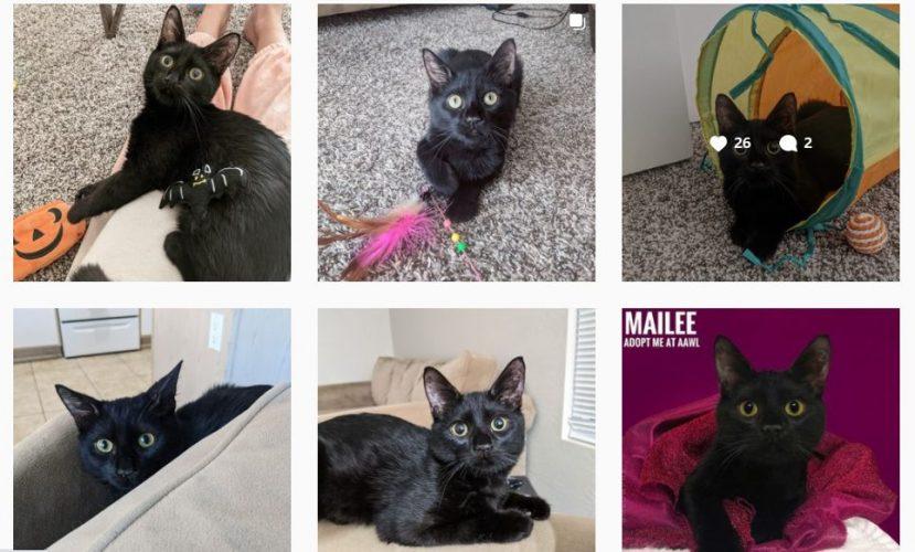 black kitten Mailee